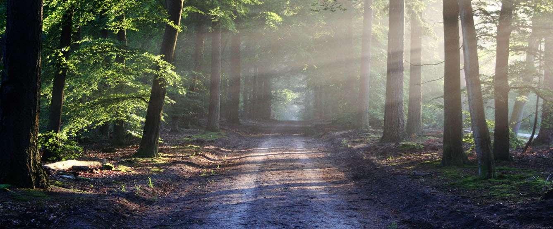 Czy można wjechać samochodem do lasu?