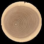 Określanie kierunków świata za pomocą roślin,Jak określić kierunki świata za pomocą ściętego drzewa