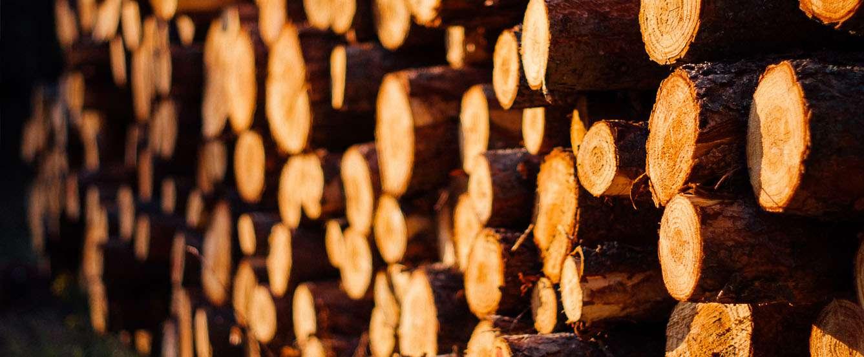 Drewno to podstawa