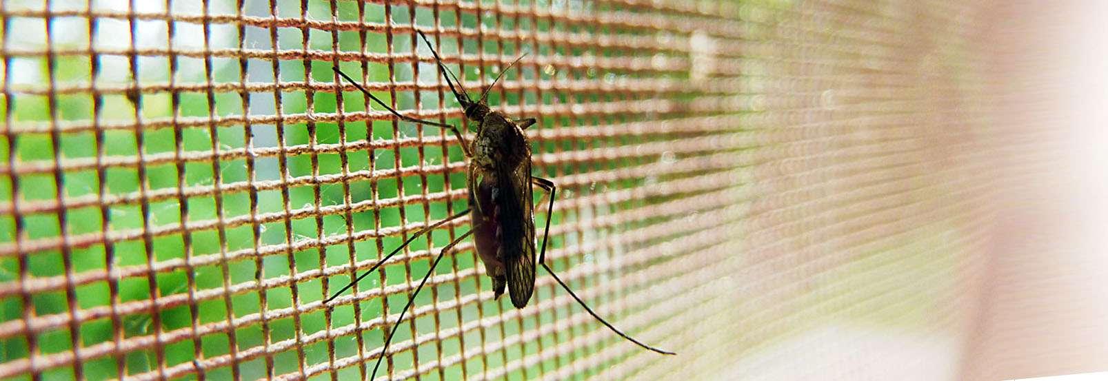 Sposoby odstraszania komarów